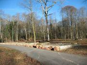 web-Bois-de-Lourdes-3