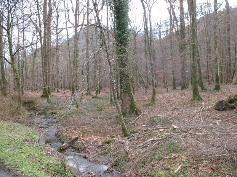 web-Bois-de-Lourdes-6