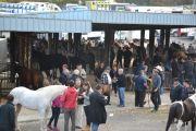 Foire-aux-chevaux-18-10-2017